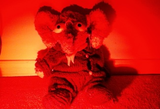 Jules, The Elephant-Wolf - wearing red light therapy goggles