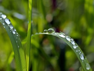 Droplets   Rosy JulieBC